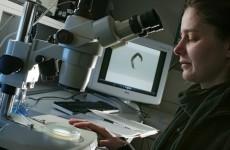 Längeres Leben durch Lithium - Kim Zarse untersucht Fadenwürmer