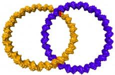 Zwei ineinander greifende Ringe aus DNA