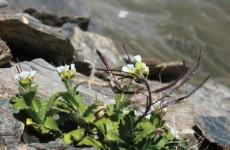 Bild: MPI f. Pflanzenzüchtungsforschung
